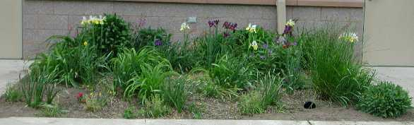 flower bed may 02